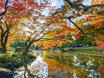 Park Hibiya