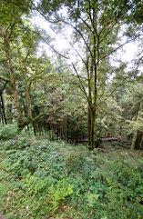 神木 (sacred tree) Trail