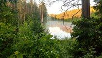 Augustów Primeval Forest