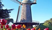 Dutch Windmill (Golden Gate Park)