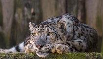 Литовский зоопарк
