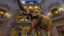 Национальный музей естественной истории (Вашингтон)