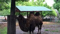 Palić Zoo