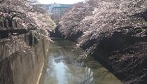 Сякудзии (река)
