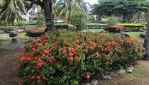 The Enchanted Gardens, Jamaica