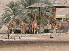 UAE - 2015-0658