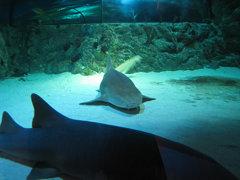 Shark tank (IMG_9134)
