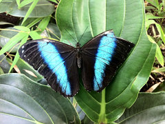 Butterfly house 5