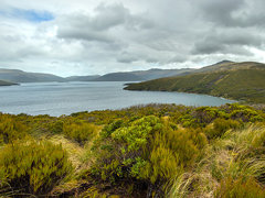 northern section of carnley harbour - auckland island (NZ)