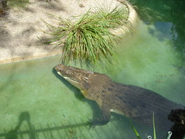 Australian Reptile Park