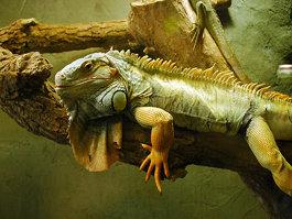 Reptilia (zoo)