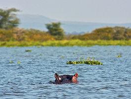 Naivasha-tó