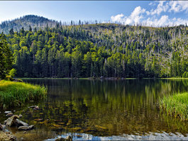 Bajor-erdő Nemzeti Park