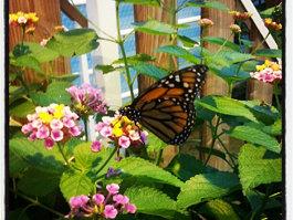 Bornholm Butterfly Park
