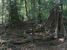 Corcovado National Park (Costa Rica)