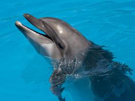 Дельфинарий (Шарм-эш-Шейх)