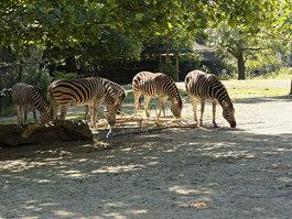 Zoo de Rotterdam
