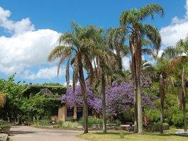Jardín Botánico Prof. Atilio Lombardo