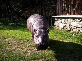 Košice Zoo