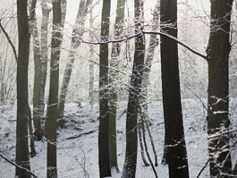 Kunratický les