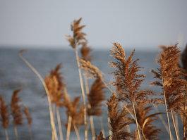 Kasumigauros ežeras
