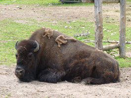 Lincoln Park Zoo (Manitowoc)