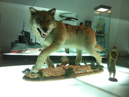 Музей Анадыря