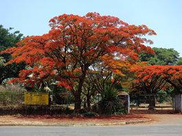 National Botanic Garden (Zimbabwe)
