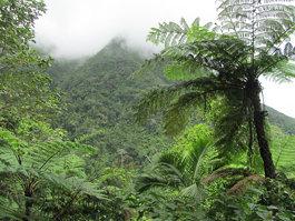 Île Niévès