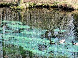 Niebieskie Źródła Nature Reserve