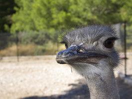 Ostrich Farm & Park