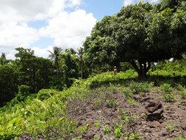 Pulemelei Mound