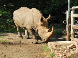 Ростовський зоопарк