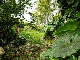 Saba (wyspa)