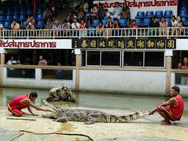 Samutprakarn Crocodile Farm and Zoo
