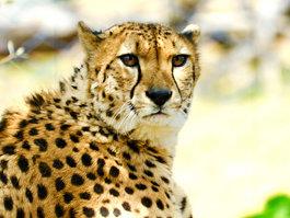Tama Zoological Park