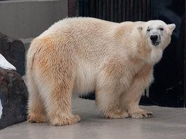 Уэно (зоопарк)