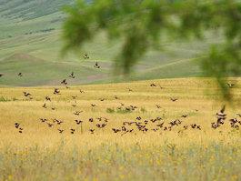 Nationaal park Vasjlovani