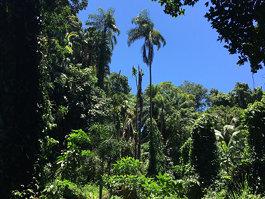 Victoria Botanical Gardens
