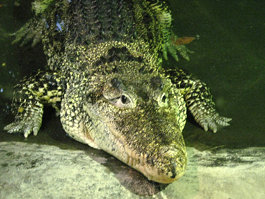 Zapata Swamp