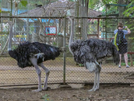 Zoológico de Paramaribo