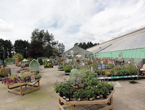 Thompsons Nursery. IOW. 2010