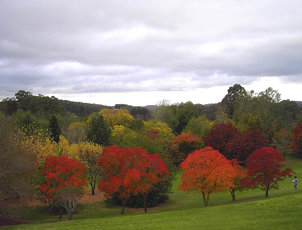 Mt Lofty Botanic Gardens in Autumn. Near Adelaide South Australia.