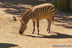 2012.05.27 Burger´s Zoo