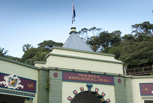 Visiting the Taronga Zoo