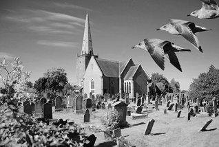 Abbey birds IR
