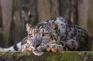Kaunas zoo