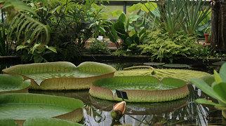 Botanische Garten der Martin-Luther-Universität Halle-Wittenberg>