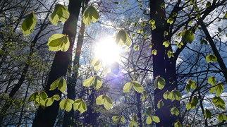 Vienna Woods>