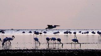 Lake Eyasi>